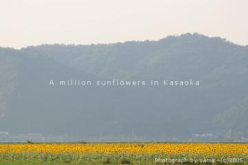 0508k_himawari3