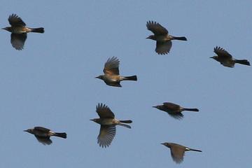 061021birds4