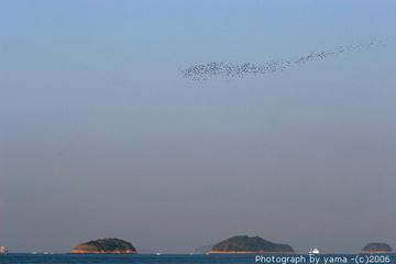 061021birds6