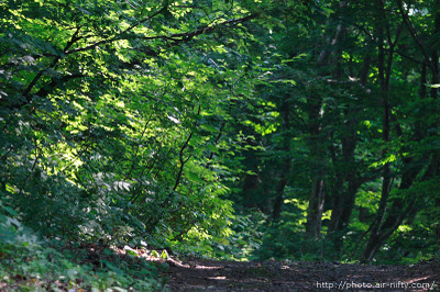 080712z_forest