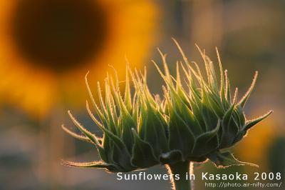 Sunf08_03