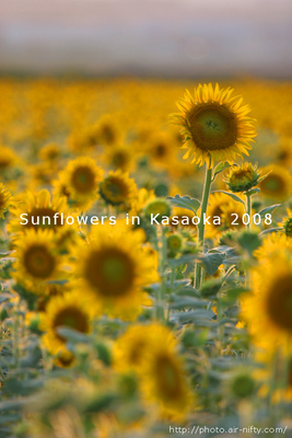 Sunf08_04t