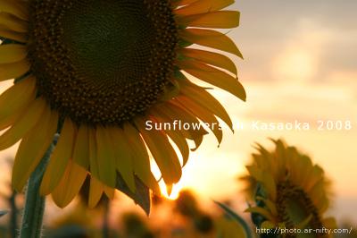 Sunf08_08_2