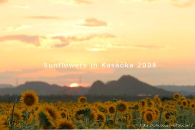 Sunf08_09_2