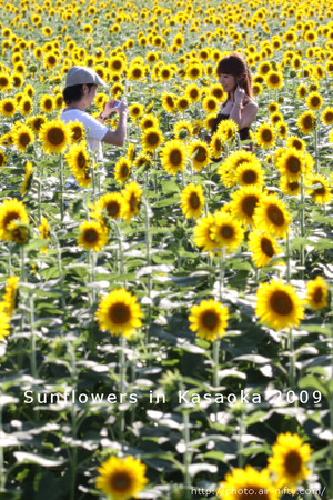 Sunf2009_03t