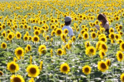Sunf2009_04