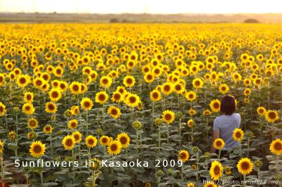Sunf2009_05
