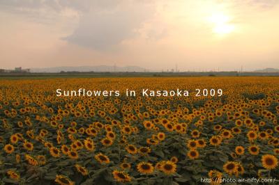 Sunf2009_32