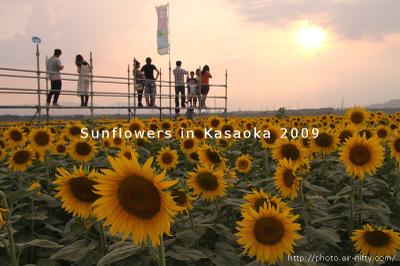 Sunf2009_33