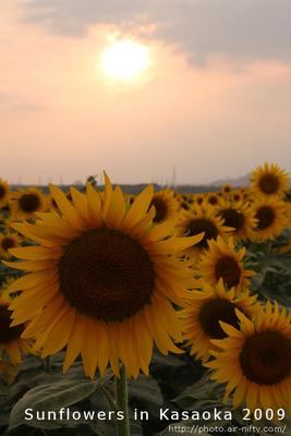 Sunf2009_33t