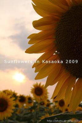Sunf2009_34t