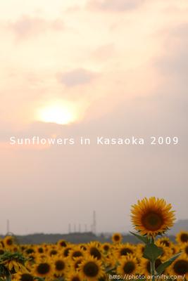 Sunf2009_35t