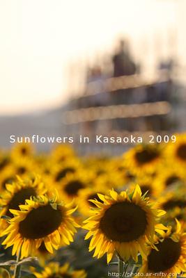Sunf2009_50t
