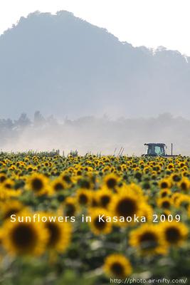 Sunf2009_52t