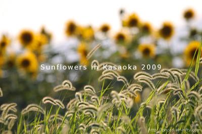 Sunf2009_53