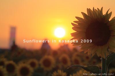 Sunf2009_55