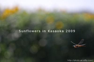 Sunf2009_56