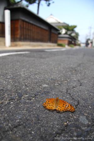 Tsumaguro01t