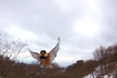Yamagara_f01