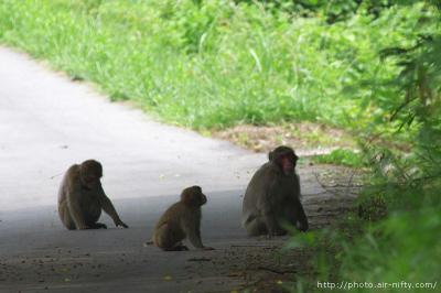 Monkey03